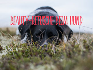Beauty-Retusche beim Hund