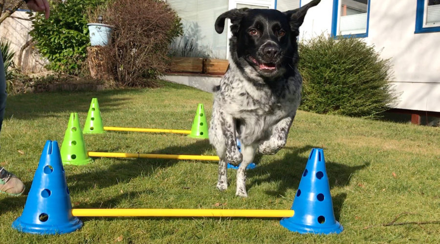 Dog Agility Kit: Fitter Hund in 10 Minuten