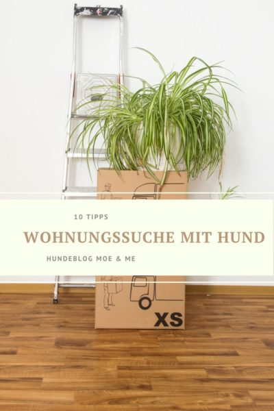 tipps zur wohnungssuche mit hund hundeblog moe and me. Black Bedroom Furniture Sets. Home Design Ideas