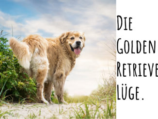 Die Golden Retriever Luege