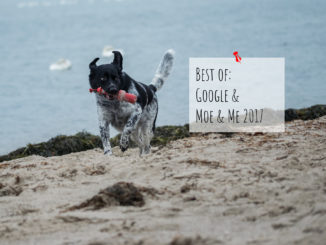 Best of Google 2017 Hundeblog Moe & Me
